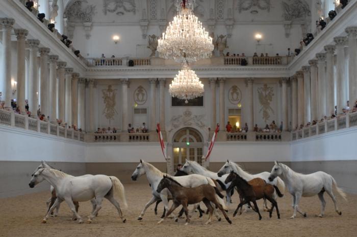 """Bei """"Piber meets Vienna"""" können die Fohlen und ihre Mütter in Wien bewundert werden. © Spanische Hofreitschule / Herbert Graf"""