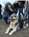 Tierflüsterer Reinhard Muth mit einem Schäferhund bei der Arbeit. (c) M. Ziegler