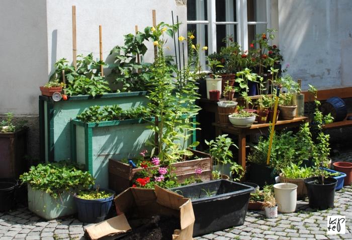 1040_urban-gardening_01