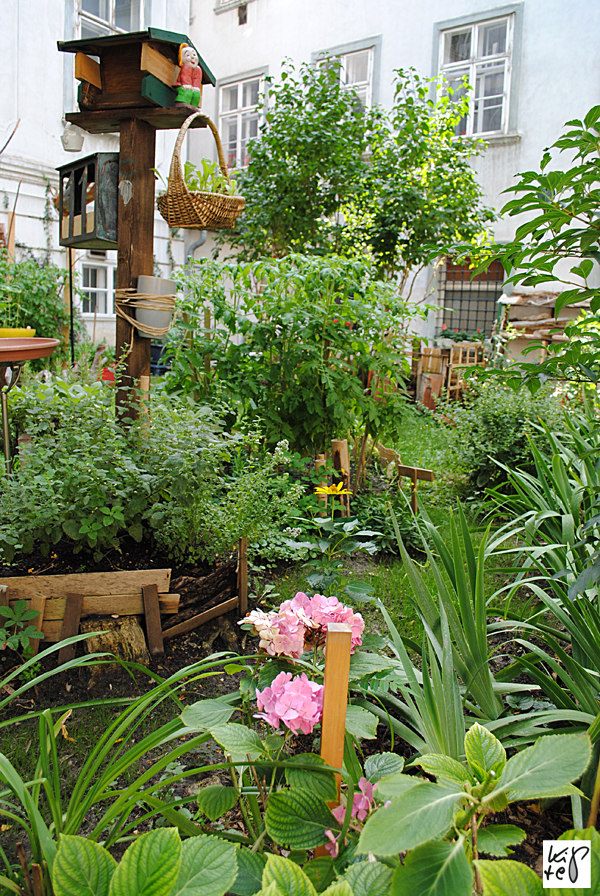 1040_urban-gardening_11