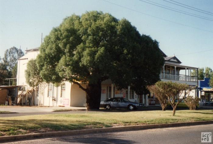 Bottle-Tree