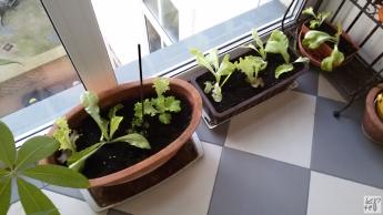 urban-gardening_1